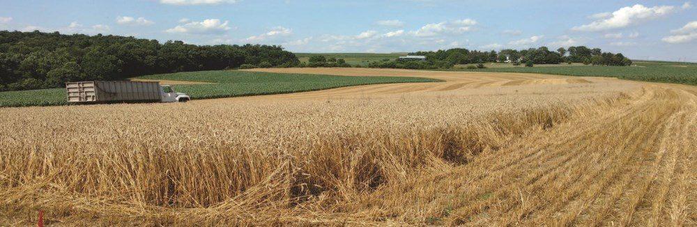 Wheat Study