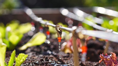 Drip Trickle Irrigation