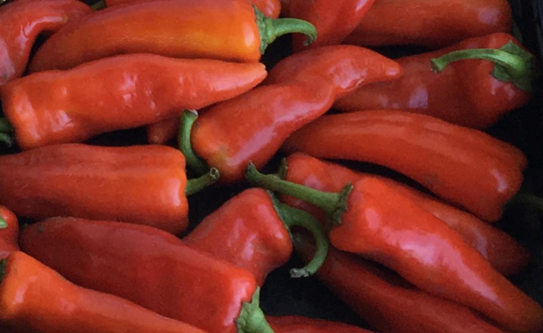 Pepper Study